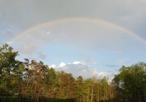 rainbow for blog